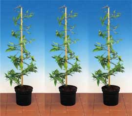 3 X Climbing Plant Support Spirals 2d Strong