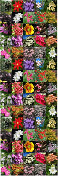 6 PLANT PRODUCT PROMOTION`PLANT`PROMOTION- Choose your own 6 Climbing Plants or Shrubs or a mixture of both - Pick 'n' Mix