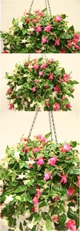 2 X FUCHSIA ARTIFICIAL HANGING BASKETS IN PURPLE & PINK SHADES WITH CREAM  - INSIDE OR OUTSIDE USE - JUST HANG AND ENJOY!
