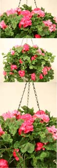 GERANIUM ARTIFICIAL HANGING BASKET IN PINK SHADES  - INSIDE OR OUTSIDE USE - JUST HANG AND ENJOY!