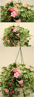 IVY, TRAILING SURFINIA, AZALEA & HYDRANGEA ARTIFICIAL HANGING BASKET IN PINK SHADES  - INSIDE OR OUTSIDE USE - JUST HANG AND ENJOY!