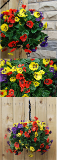 PANSY BALL ARTIFICIAL HANGING BASKET IN 3 MIXED COLOURS - YELLOW, RED & PURPLE WITH CHEEKY FACES - INSIDE OR OUTSIDE USE - JUST HANG AND ENJOY!